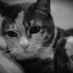 Rosa Cat