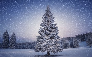 Beautiful-Christmas-Tree-Wallpapers-6