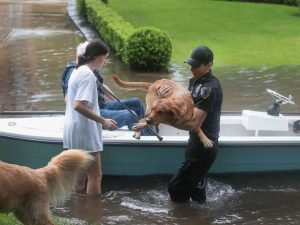 pet-rescue-hurricane-harvey-gty-mem-170828_4x3_992